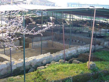 Cidade Romana de Tongóbriga